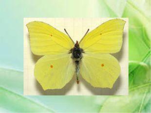 Мелкое летающее насекомое, самки которого питаются кровью. Имеют длинное тело