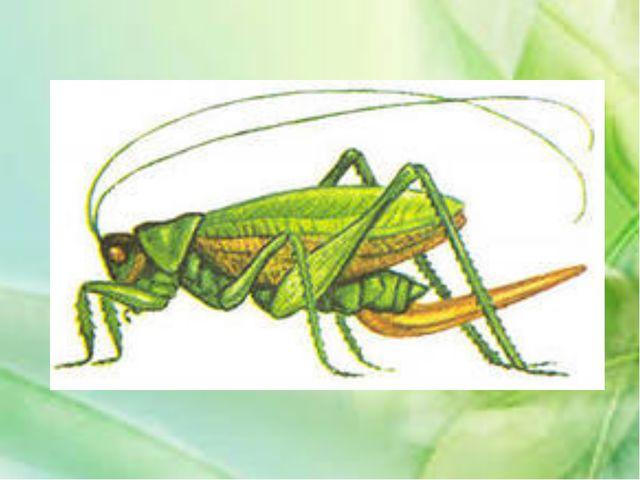 Летающее насекомое, имеющее «тигриную» окраску – жёлтые и чёрные полосы. Прин...