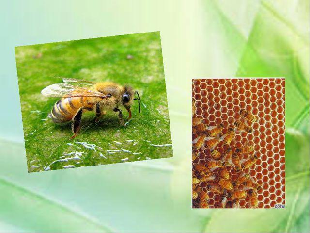 Каких животных называют насекомыми?