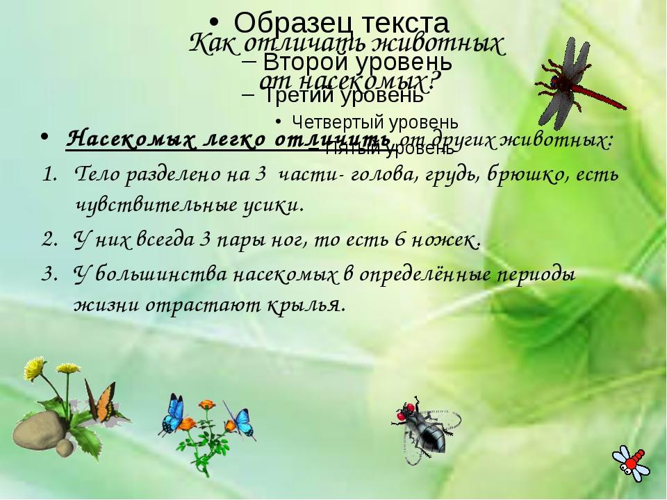 Как отличать животных от насекомых? Насекомых легко отличить от других живот...