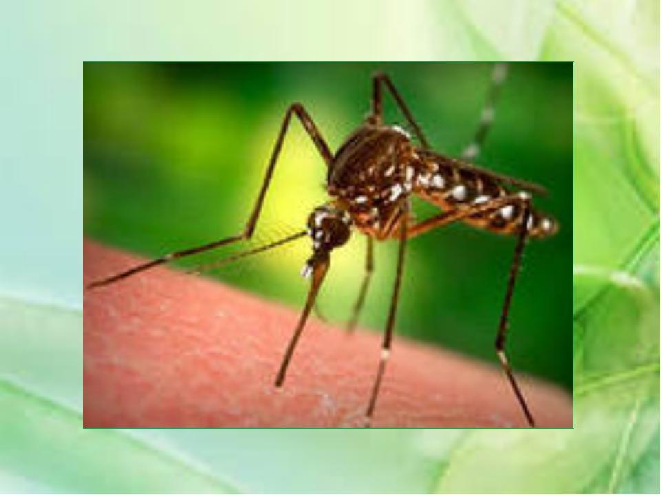 Маленькие не летающие чёрные и рыжие насекомые, живущие большими группами, жи...