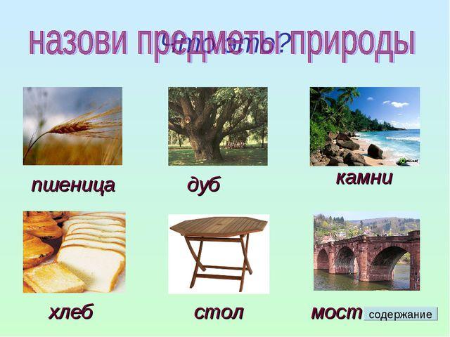 Что это? пшеница дуб камни хлеб стол мост содержание