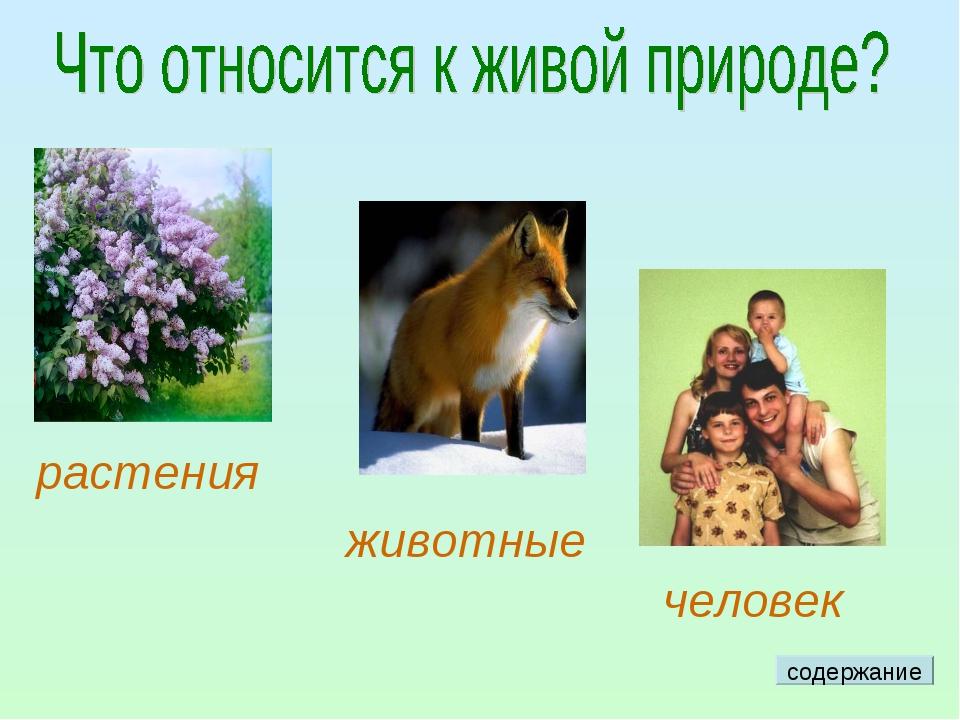 растения животные человек содержание