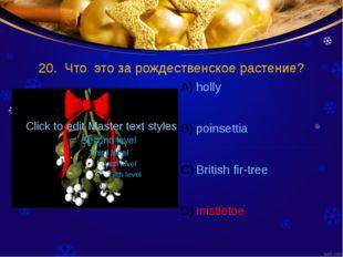 20. Что это за рождественское растение? holly poinsettia British fir-tree mis