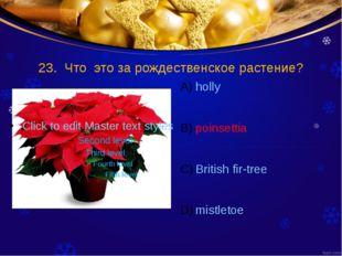 23. Что это за рождественское растение? holly poinsettia British fir-tree mis