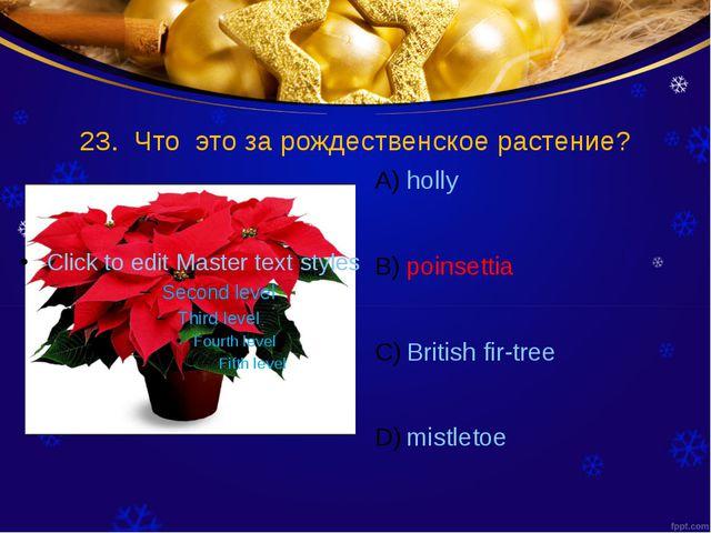 23. Что это за рождественское растение? holly poinsettia British fir-tree mis...