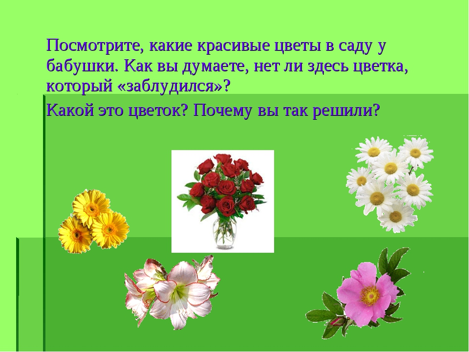 Посмотрите, какие красивые цветы в саду у бабушки. Как вы думаете, нет ли зде...