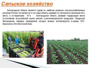 Сельское хозяйство Белгородская область является одним из наиболее развитых