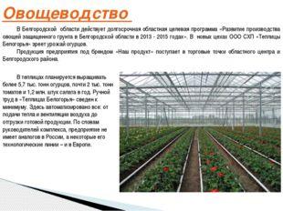 Овощеводство В Белгородской области действует долгосрочная областная целевая
