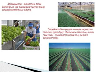 Потребности белгородцев в овощах закрытого и открытого грунта будут обеспече