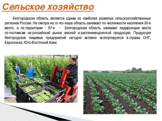Сельское хозяйство Белгородская область является одним из наиболее развитых...