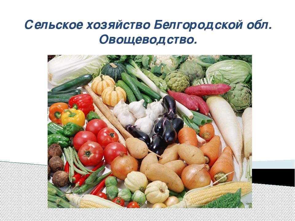 Сельское хозяйство Белгородской обл. Овощеводство.