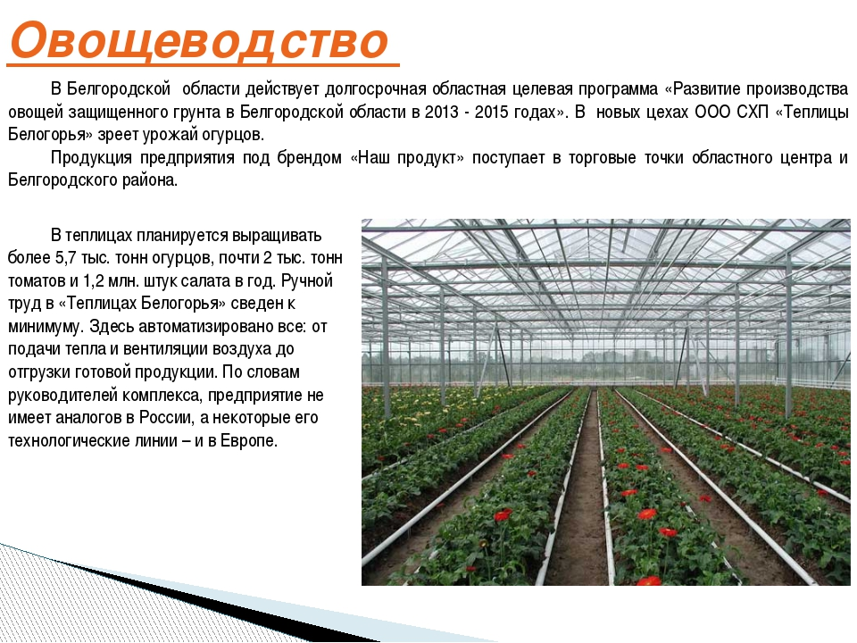 Овощеводство В Белгородской области действует долгосрочная областная целевая...
