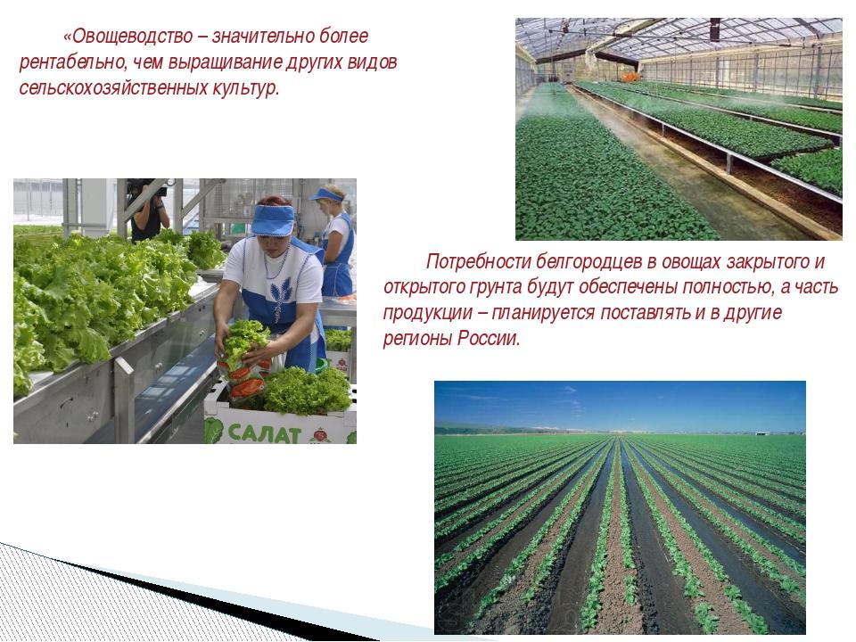 Потребности белгородцев в овощах закрытого и открытого грунта будут обеспече...