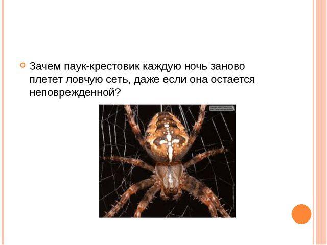 Зачем паук-крестовик каждую ночь заново плетет ловчую сеть, даже если она ост...