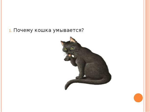 Почему кошка умывается?