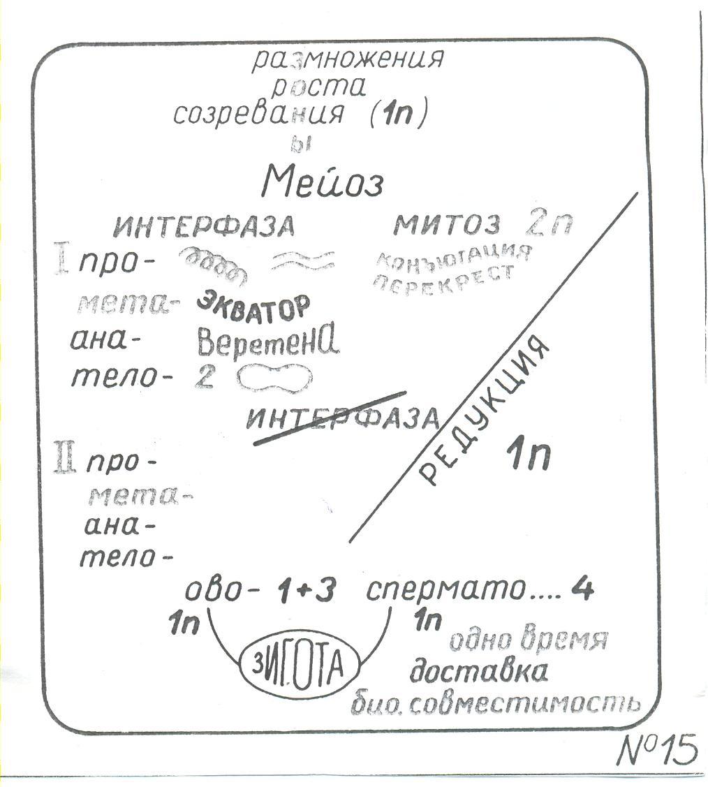 Учебник биологии 10-11класс д.к.беляев.параграф 20.деление клеток.митоз