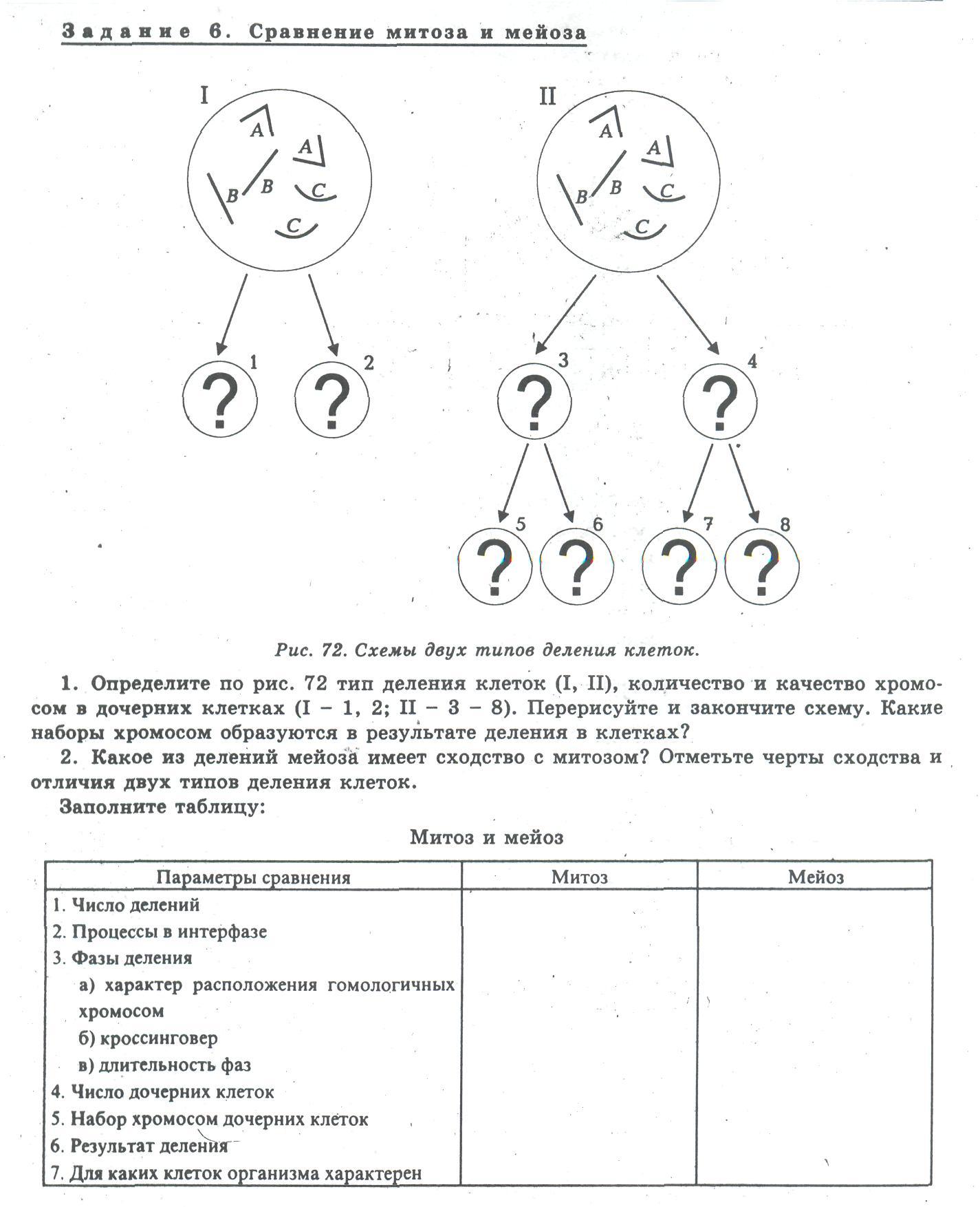 митоз и мейоз схема на казахском языке