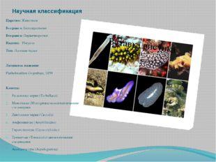 Научная классификация Царство: Животные Без ранга: Билатеральные Без ранга: П