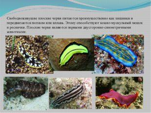 Свободноживущие плоские черви питаются преимущественно как хищники и передвиг