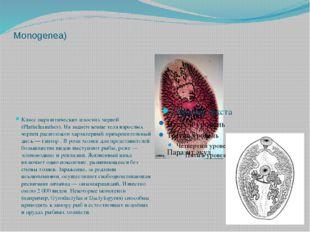 Моногене́и, или моногенети́ческие соса́льщики(лат. Monogenea) Класс паразитич