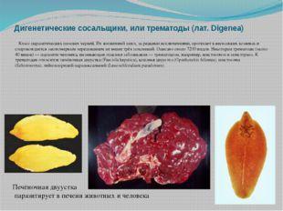 Дигенетические сосальщики, или трематоды (лат. Digenea) Класс паразитических