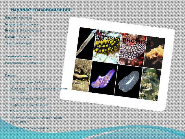 Научная классификация Царство: Животные Без ранга: Билатеральные Без ранга: П...