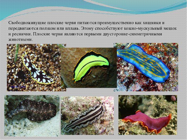 Свободноживущие плоские черви питаются преимущественно как хищники и передвиг...
