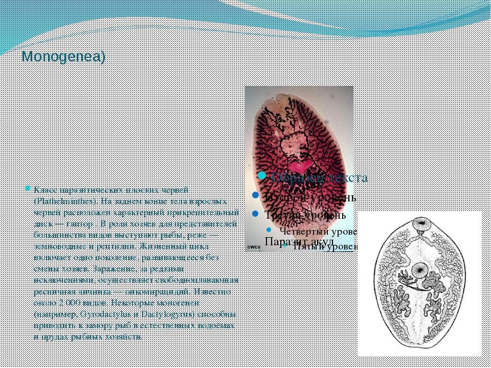 Моногене́и, или моногенети́ческие соса́льщики(лат. Monogenea) Класс паразитич...