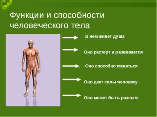 Функции и способности человеческого тела В нем живет душа Оно растерт и разви