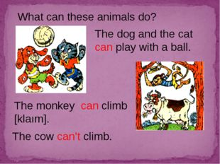 What can these animals do? The dog and the cat can play with a ball. The monk