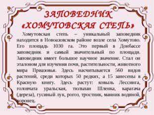 ЗАПОВЕДНИК «ХОМУТОВСКАЯ СТЕПЬ» Хомутовская степь – уникальный заповедник нахо