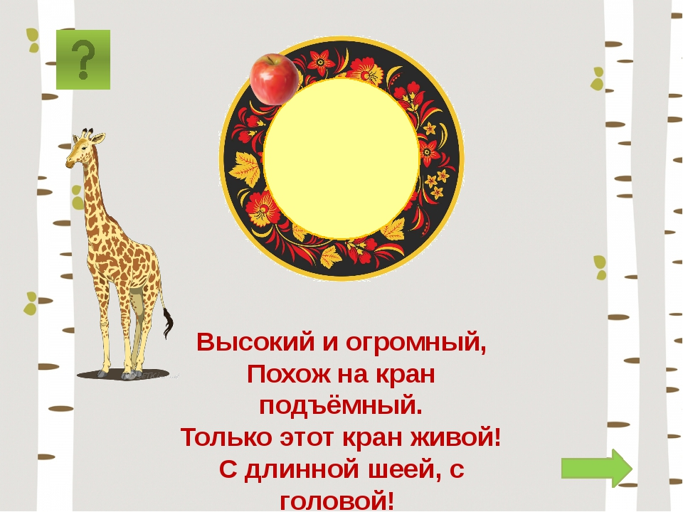 жираф Высокий и огромный, Похож на кран подъёмный. Только этот кран живой! С...