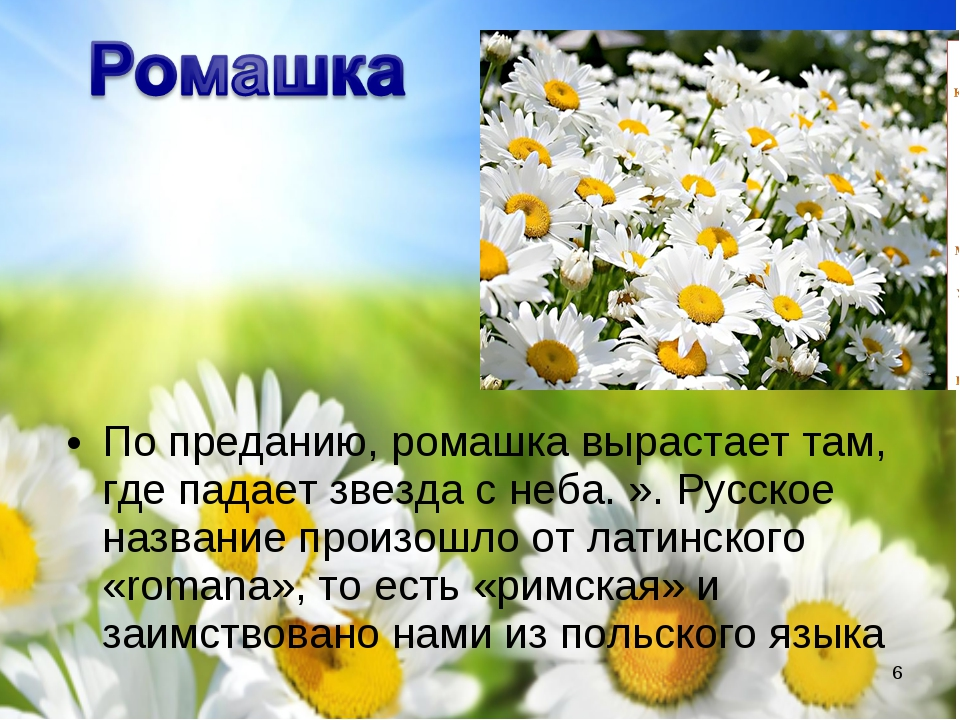 По преданию, ромашка вырастает там, где падает звезда с неба. ». Русское назв...