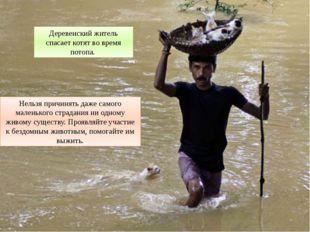 Деревенский житель спасает котят во время потопа. Нельзя причинять даже самог