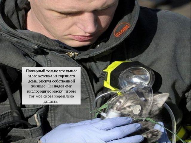 Пожарный только что вынес этого котенка из горящего дома, рискуя собственной...