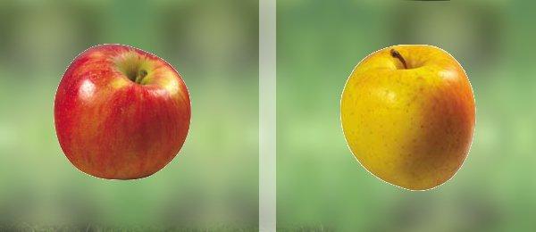 Яблоки, которые нашел ежик