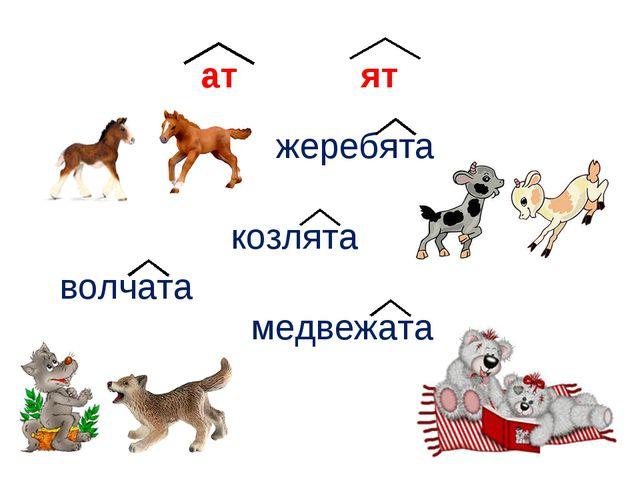 ат ят жеребята козлята волчата медвежата