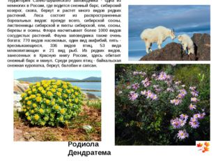 Территория Саяно-Шушенского заповедника - одна из немногих в России, где води