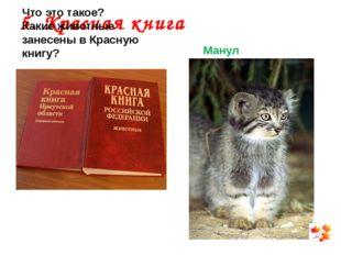 5. Красная книга Что это такое? Какие животные занесены в Красную книгу? Манул