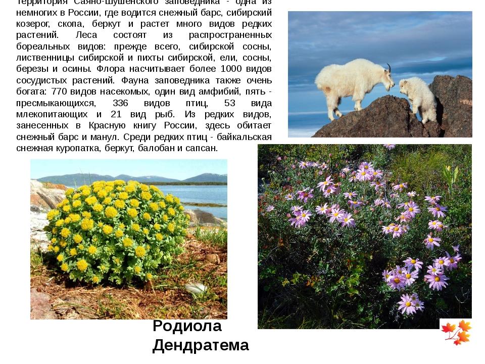 Территория Саяно-Шушенского заповедника - одна из немногих в России, где води...