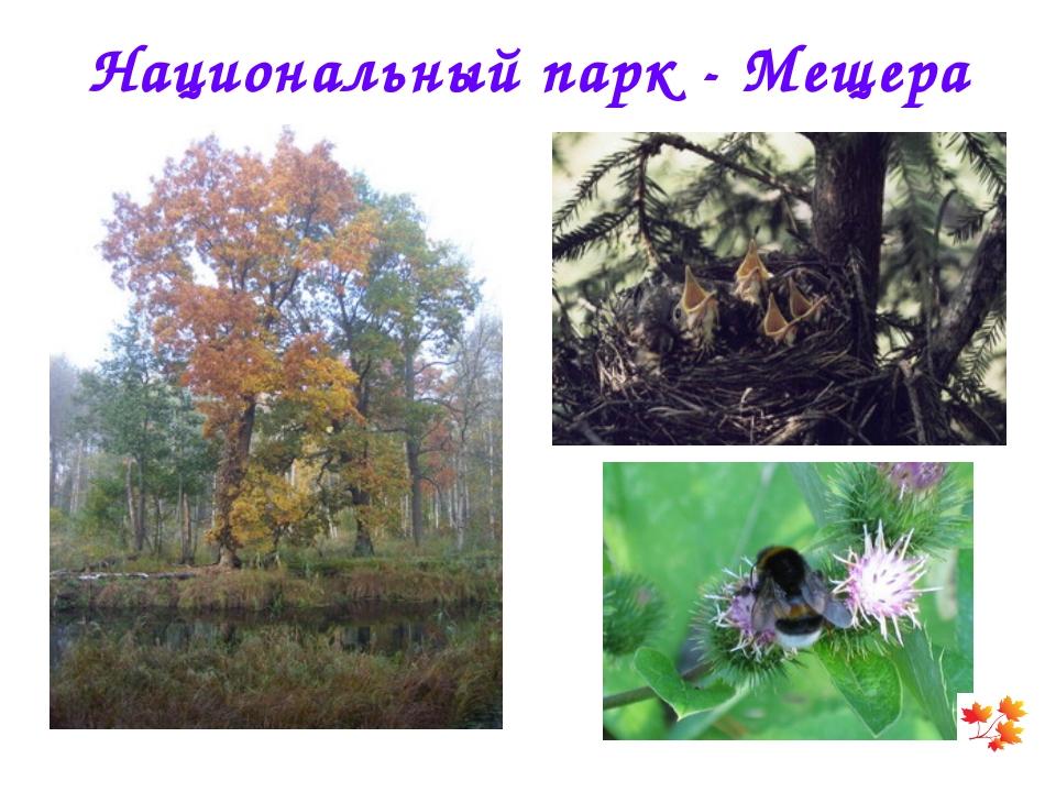 Национальный парк - Мещера