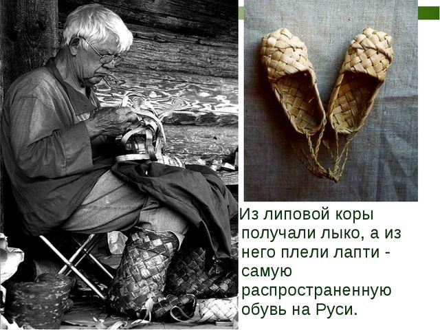 Из липовой коры получали лыко, а из него плели лапти - самую распространенну...