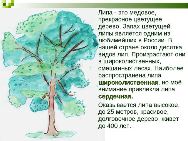 Липа - это медовое, прекрасное цветущее дерево. Запах цветущей липы является...