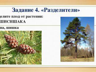 Задание 4. «Разделители» Отделите плод от растения: СОШИСНШАКА Сосна, шишка
