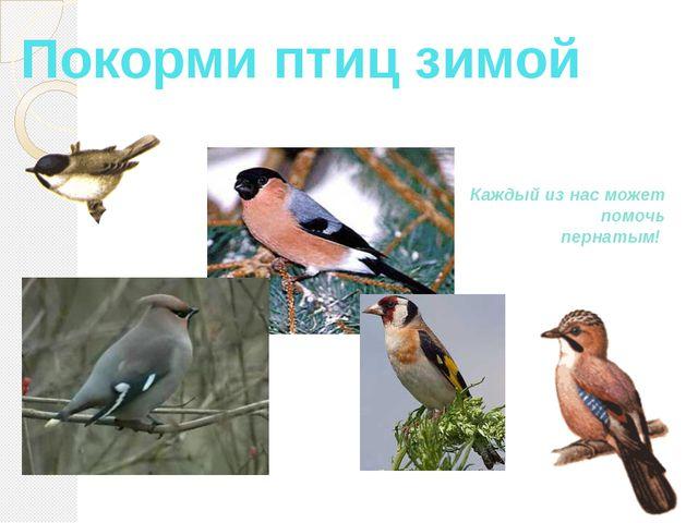 Покорми птиц зимой Каждый из нас может помочь пернатым!