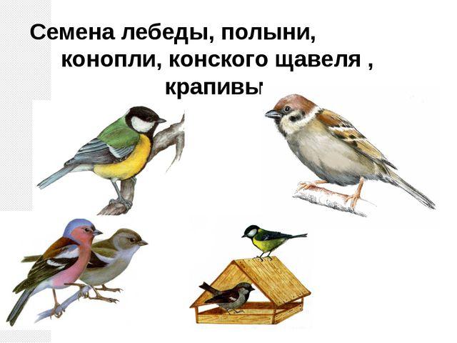 Семена лебеды, полыни, конопли, конского щавеля , крапивы