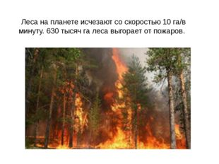 Леса на планете исчезают со скоростью 10 га/в минуту. 630 тысяч га леса выго