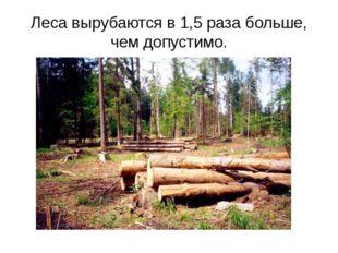 Леса вырубаются в 1,5 раза больше, чем допустимо.