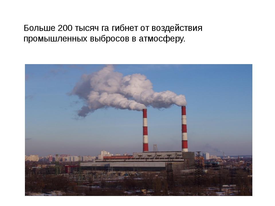 Больше 200 тысяч га гибнет от воздействия промышленных выбросов в атмосферу.